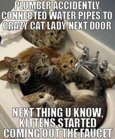 plumber-accidently-connected-our-water-pipes-to-crazy-cat-lady-neighbor-kittens-