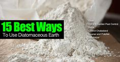 All the Diatomaceous Earth uses makes DE one items homeowners can use to handle a broad range of pest problems. Types Of Bugs, Types Of Insects, Joe Jonas, Bug Control, Pest Control, Flea Spray, Bees And Wasps, Pest Management, Humming Bird Feeders
