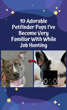 10 Adorable Petfinder Pups I've Become Very Familiar With While Job Hunting Jungkook Funny, Pet Finder, World 2020, April 10, Halloween Horror, Funny Humor, Halloween Decorations, Hunting, Weird