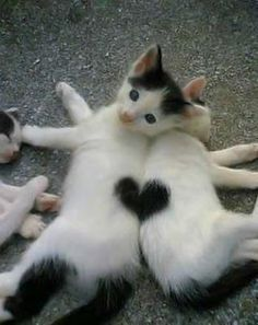 two cats make a heart