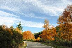 Along some random road in #newzealand #southislandnz. #fall #autumn #roadtrip #orange #travel #traveling #travelgram #instagood #instatravel #wanderlust