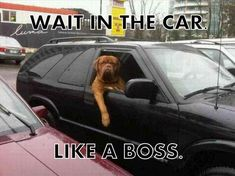 Like A Boss II | http://funnysillypictures.blogspot.com/