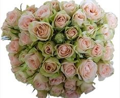 Chablis - Spray Rose - Roses - Flowers by category | Sierra Flower Finder