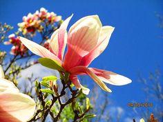 A beautiful flower on a tree.