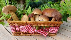 Přinesli jste si z lesa košík hub? Marinated Mushrooms, Stuffed Mushrooms, Indoor Farming, Shiitake, Troubles Digestifs, How To Cook Mushrooms, Eating Raw, Gastronomia, Vegans