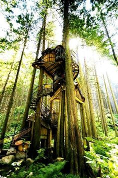 One of the largest treehouse's in North America...and one of our personal favorites. The best part, visitors are welcome to explore it...