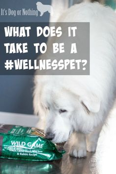 Is your dog a #WellnessPet? Here's how I tell if my Great Pyrenees are showing the 5 Signs of Wellness. @wellnesspetfood @petsmartcorp #ad