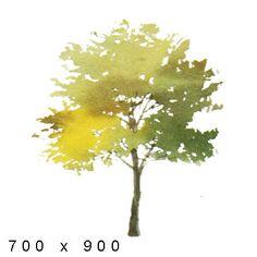 Texture png Watercolor Elements Plants