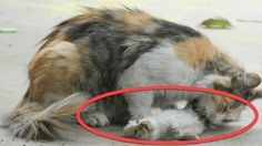 Mama Cat Was Licking Her Kittens On The Road But When I Took A Closer Look? Tears !