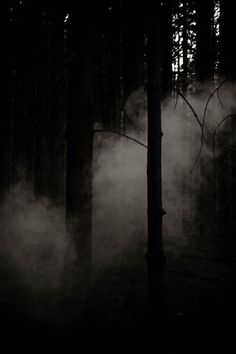 Going to Fort Meade to see the ghost lights near Heard Bridge? Use caution, as dark entities linger in the surrounding area, watching you. Dark Photography, Black And White Photography, Wedding Photography, Dark Forest, Magical Forest, Tree Forest, All Nature, Amazing Nature, Dark Places