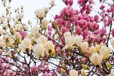 """Képtalálat a következőre: """"tavaszi képek"""""""