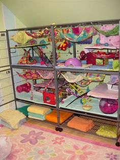 Rat cage set-up