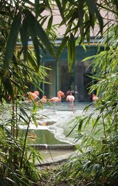 Flamingos, zoo of Vienna. Most Beautiful, Beautiful Pictures, Random House, Vienna, Old Things, Colorful, World, Illustration, Inspiration