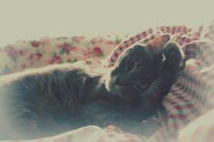 Lovely cat.