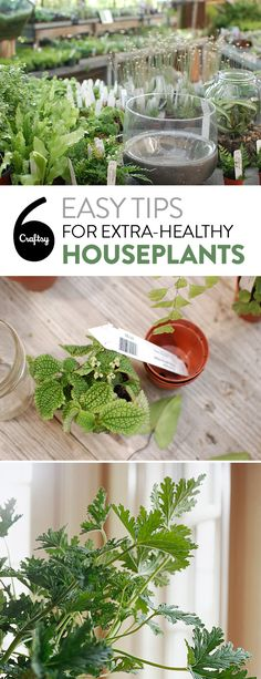 Keep your houseplants happy and healthy with these 6 need to know tips.