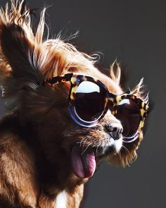 Meet the four-legged model with a big personality and even bigger sunglasses.
