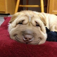 Glad DogBox :)