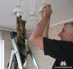 """How many cats does it take to change a light bulb?!"" From Catloversclub ( IG ) #cat #cats #kitten #kitty #meow"