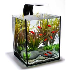 Interested in a small, easy to maintain aquarium like this. This one is 109.99