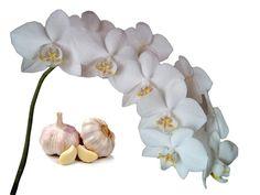 Янтарная кислота для орхидеи. Как применять. - YouTube