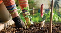 Receita de adubos caseiros e orgânicos para seu jardim e horta | Cura pela Natureza.com.br