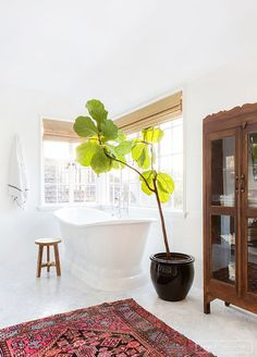 GO OVERSIZE   Sunny white bathroom with pink accent rug, freestanding bathtub, and large potted tree plant.