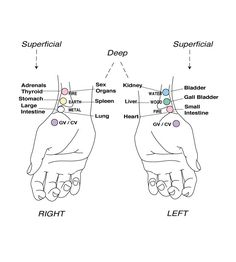 acupuncture pulse diagram | Acupuncture pulse points used at the wrist. Repinned http://www.medischeqigong.com/ http://www.academ.nl/ #acupuncture #energy
