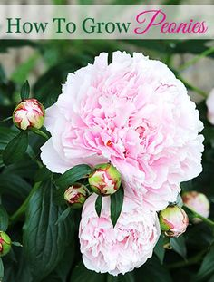 Vintage Flowers From Your Grandma's Garden - House of Hawthornes