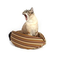 The Cat Canoe Cat Bed