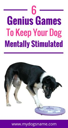 Is your dog bored and acting naughty? Keep your pup mentally stimulated with these six genius games. Their behavior will improve, guaranteed!