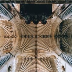 Photographs by David Stephenson. Always look up.