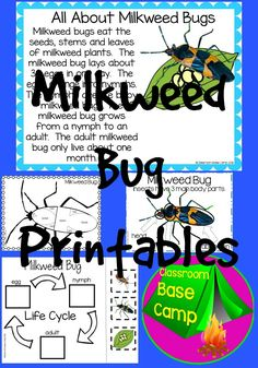 Milkweed Bug worksheets and printables for young students.  These pages are perfect to meet NGSS standards and accompany AMSTI Plants and Animals Unit.  It includes milkweed bug life cycle, body parts, writing, and more.
