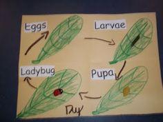 grouch lady bug follow up