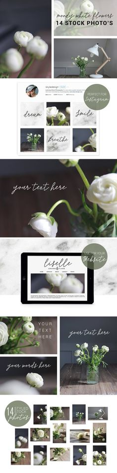 Stock photo, Moody white flower by Skyla Design on @creativemarket #moody #white #flowers #floral #greenery #stock #styled #image #bundle #picture #frame #scene #creator #vectors #design #kit #preset #overlay #graphic #design #photoshop #lightroom #actions #brush #premade #social #media #print #download #website #digital #template #theme #blog #facebook #feminine #instagram #mockup