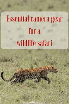 There are few things worse than returning home from a once in a lifetime safari and feeling utterly disappointed your photos don't do your trip justice. Avoid disappointment with this list of essential camera gear for a wildlife safari. #safari #cameragear Read the full article here: http://mowgli-adventures.com/essential-camera-gear-for-a-wildlife-safari/