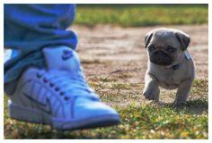 Houdino Foto » Nike og Møffe
