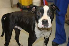Murray: Male pit with multiple pelvic fractures needs rescue by 6 p.m. Saturday