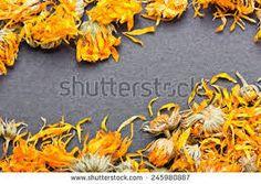 Image result for dry orange marigold