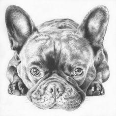 Frenchbulldog Portrait in Ballpoint Pen  5x5by Leah Davies