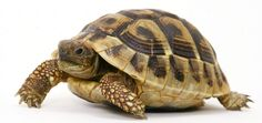 Marathon Running. Training Plan Week 15/30. Running With The Grace And Speed Of An Asthmatic Tortoise!