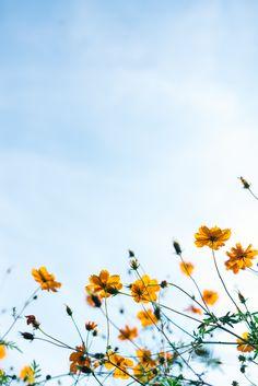 900 Nice Flower Ideas Beautiful Flowers Flowers Pretty Flowers