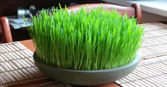 21 Amazing Benefits of Eating Wheatgrass