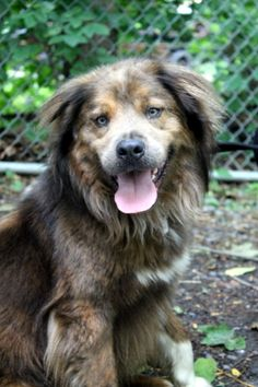 Adopted! Check out this amazingly handsome pup! Titan is a three-year-old Australian Shepherd mix with a gorgeous coat, beautiful eyes and a sweet personality. Although bashful when meeting new faces and being introduced to new situations, Titan only needs some gentle reassurance before he'll give you this love and trust! Titan would love to join your active and loving home!