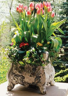I have similar planters, great container gardening. Garden Urns, Garden Planters, Container Plants, Container Gardening, Container Flowers, Beautiful Gardens, Beautiful Flowers, Pot Jardin, Pot Plante