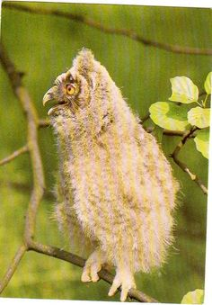 Owl Postcard by sharonfostervintage on Etsy, $1.00