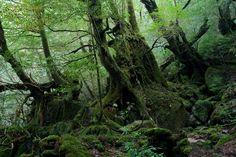 Shiratani Unsui Gorge 17 - もののけ姫 - Wikipedia