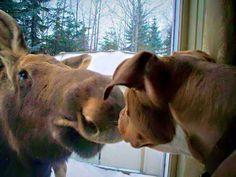 Moose & Dog