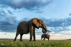 Mother Elephant With Her New Baby.