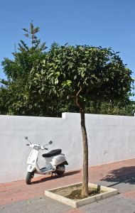 scooters of Nerja