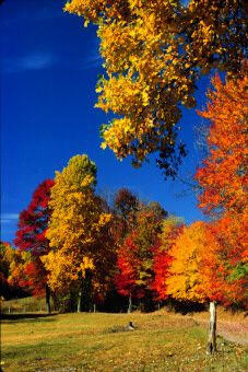 ✯ Fall Colors in West Virginia.
